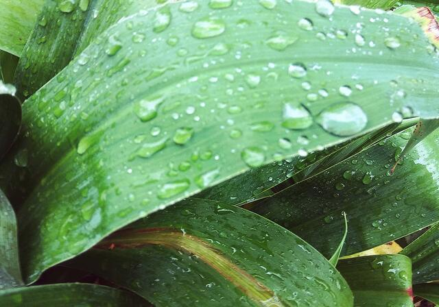 raindrops on leaf during WMU-Cooley New Zealand Study Abroad
